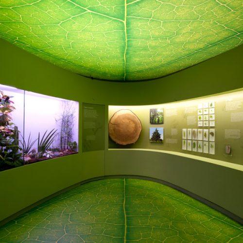 ABS Group - Museo di storia naturale di Venezia
