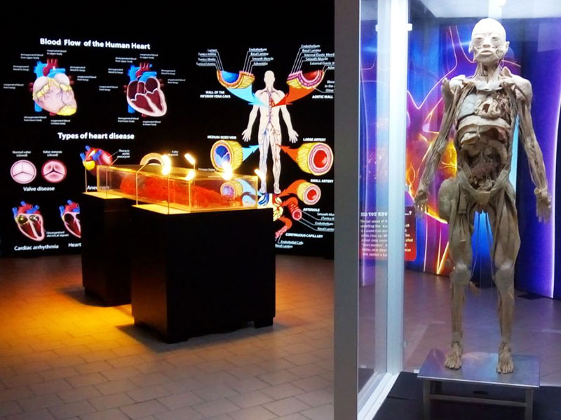 ABS Group - Mostra Bodies